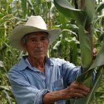 1-agricultor_maiz_mx_0